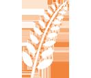 Branche - Grain